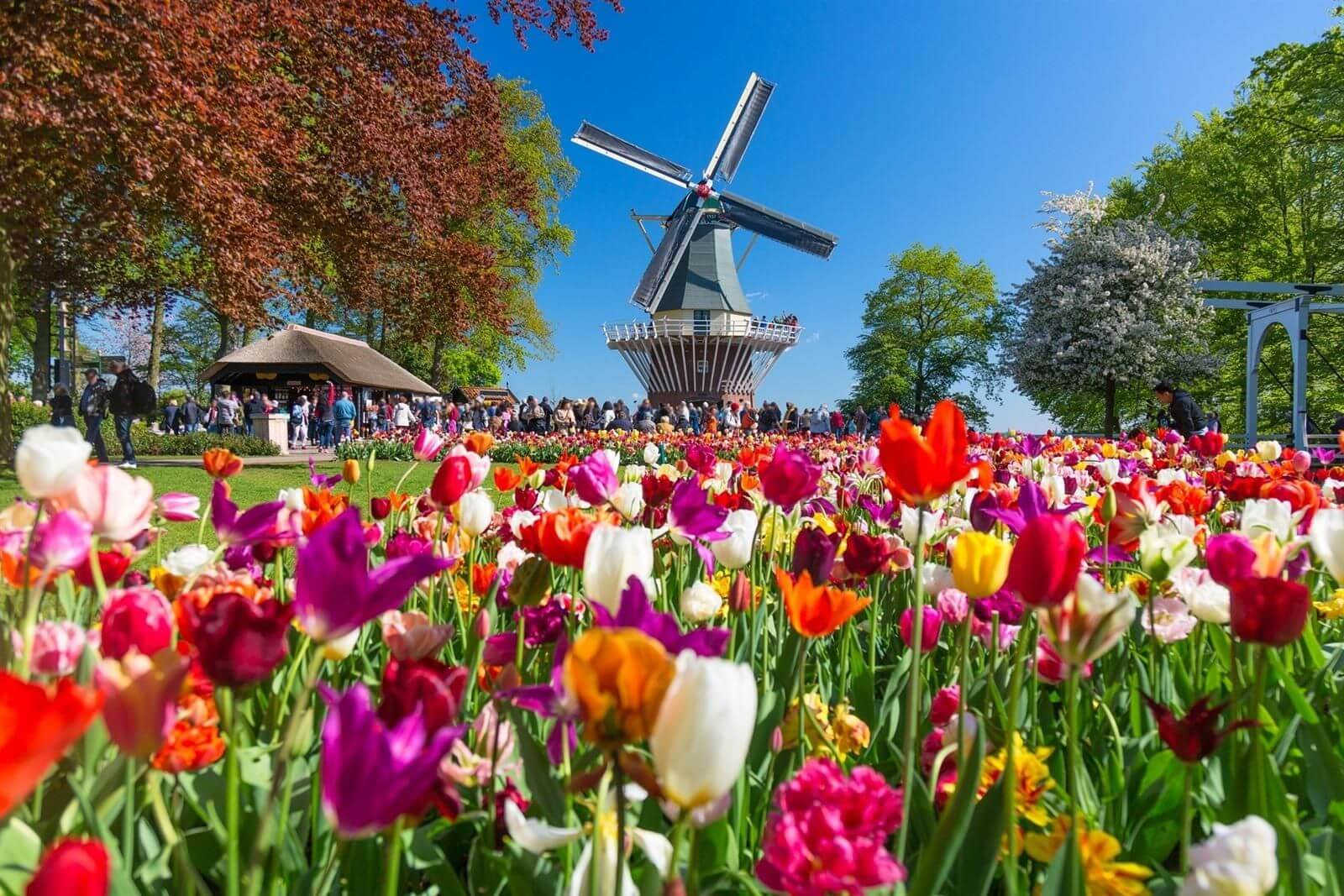 Nearby among other things: the Keukenhof